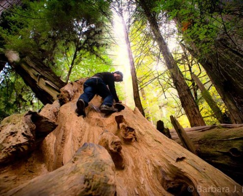 Redwoods BJMiller-008__scaled_850