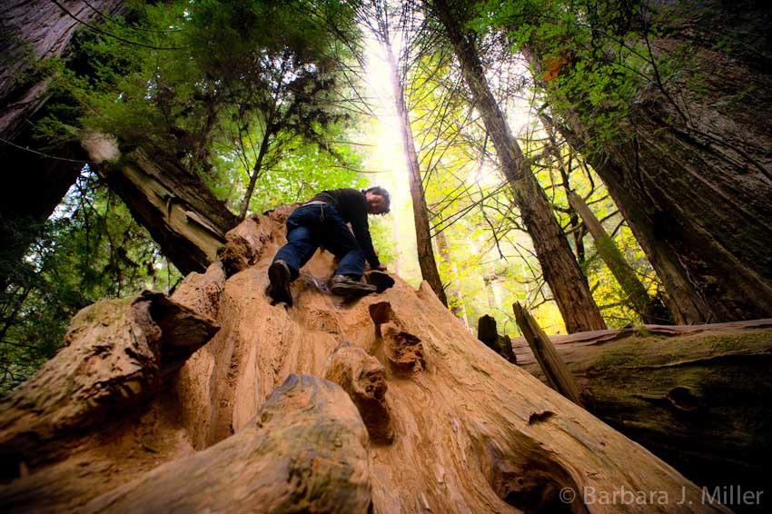 Redwoods BJMiller-008__scaled_850